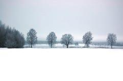 Línea de árboles Fotografía de archivo