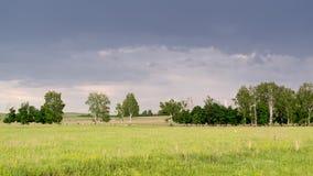 Línea de árboles de abedul en paisaje remoto Imagen de archivo libre de regalías