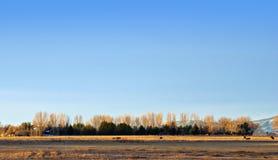 Línea de árboles en el horizonte imágenes de archivo libres de regalías