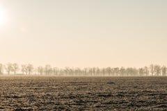 Línea de árboles en un campo Imagen de archivo libre de regalías