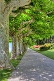Línea de árboles en un parque Imagenes de archivo