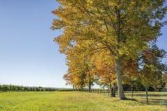 Línea de árboles encima de una colina imágenes de archivo libres de regalías
