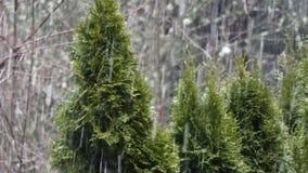 Línea de árboles verdes en invierno con caer del bosque y de la nieve metrajes