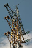 Línea de alto voltaje sentada del cuervo Imagen de archivo