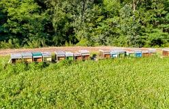 Línea de colmenas coloridas en un prado Fotografía de archivo