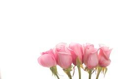 Línea de fondo rosado de las rosas Imagen de archivo