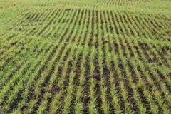 Línea de hierba en el campo Fotografía de archivo libre de regalías