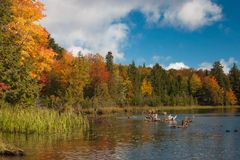 Línea de la playa colorida en Autumn Day fotografía de archivo libre de regalías