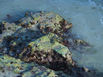 Línea de la playa de Aruba Imagen de archivo