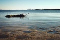 Línea de la playa de Tampa Bay con el tocón flotante de la palma Imagenes de archivo