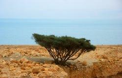 Línea de la playa del mar muerto Foto de archivo