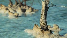 Línea de la playa del mar muerto Fotografía de archivo