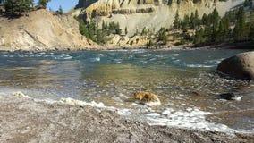 Línea de la playa del río Imagenes de archivo