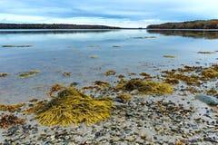 Línea de la playa durante la bajamar en la costa de Maine Foto de archivo