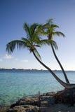 Línea de la playa tropical de la palmera Foto de archivo