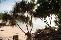 Línea de la playa tropical pintoresca con las palmas fotos de archivo