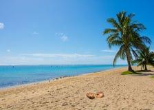 Línea de la playa vacía de la playa con las palmeras y las cáscaras del coco Fotos de archivo libres de regalías