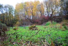 Línea de los arbustos y de los sauces amarillos, hierba verde al borde del bosque cerca de los licores foto de archivo libre de regalías