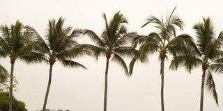 Línea de palmeras Imagen de archivo libre de regalías