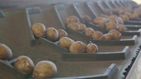 Línea de transformación de patata almacen de video