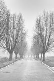 Línea del camino con los árboles Imágenes de archivo libres de regalías