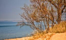 Línea del horizonte a través de ramas de árboles fotos de archivo