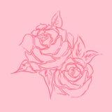 Línea dibujo de las rosas del arte con la mano dibujada en tema rosado Foto de archivo libre de regalías