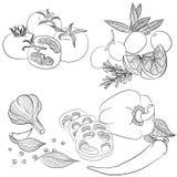 Línea diversas verduras del arte Fotografía de archivo