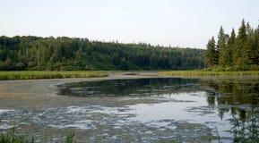 Línea divisoria de las aguas boreal del bosque Imágenes de archivo libres de regalías