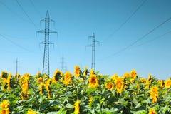 Línea eléctrica de alto voltaje en el campo de girasoles Fotografía de archivo libre de regalías
