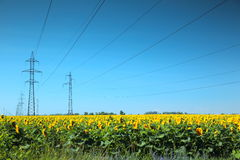 Línea eléctrica de alto voltaje en el campo de girasoles Fotos de archivo libres de regalías