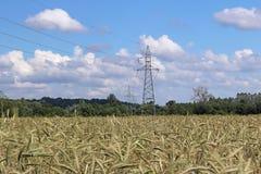 Línea eléctrica en el campo del centeno y de la cebada Maduración del sector agrario de la cosecha futura de la industria agrícol imagen de archivo libre de regalías