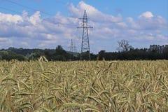 Línea eléctrica en el campo del centeno y de la cebada Maduración del sector agrario de la cosecha futura de la industria agrícol imagen de archivo
