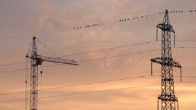 Línea eléctrica, grúa de construcción y pájaros con el cielo colorido cremoso por la mañana metrajes