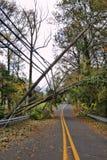 Línea eléctrica utilitaria y poste derribados por el árbol caido Imagenes de archivo