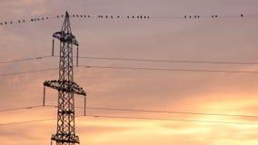 Línea eléctrica y pájaros con el cielo colorido cremoso por la mañana almacen de video
