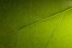 Línea en la lámina de la hierba imagen de archivo libre de regalías
