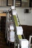 Línea industrial del transportador Imagen de archivo libre de regalías