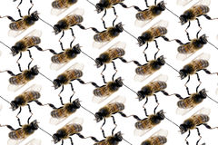Línea modelo de la abeja en el fondo blanco Imágenes de archivo libres de regalías