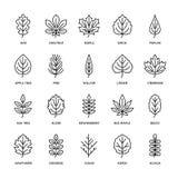 Línea plana iconos de las hojas de otoño La hoja mecanografía, serbal, árbol de abedul, arce, castaña, roble, pino del cedro, til libre illustration