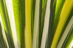 Línea textura de la hoja de la hierba Fotos de archivo