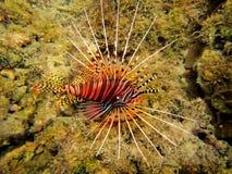 Línea tropical pescado fotos de archivo
