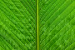 Línea verde de la hoja Foto de archivo libre de regalías