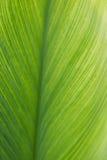 Línea verde fondo de la hoja de la textura, vertical Imagenes de archivo