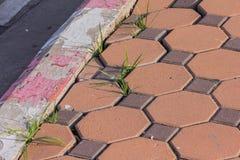 Líneas blancas rojas del parte movible de la hierba verde Fotos de archivo