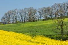 Líneas de campos verdes y amarillos debajo del cielo Foto de archivo