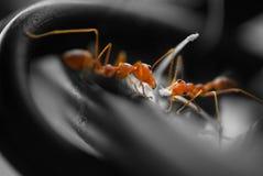 Líneas de conexión ocupadas de las hormigas Imagenes de archivo