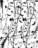 Líneas de la planta Fotos de archivo