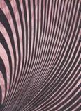 Líneas de las curvas. Foto de archivo libre de regalías