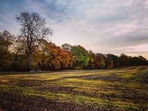 Líneas del otoño Imágenes de archivo libres de regalías